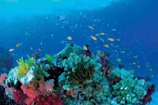 обзор интересных фактов о Мировом океане