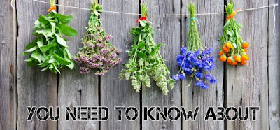 5 Healing Herbs You Must Know About!!
