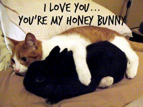 Sweet Love Memes 4