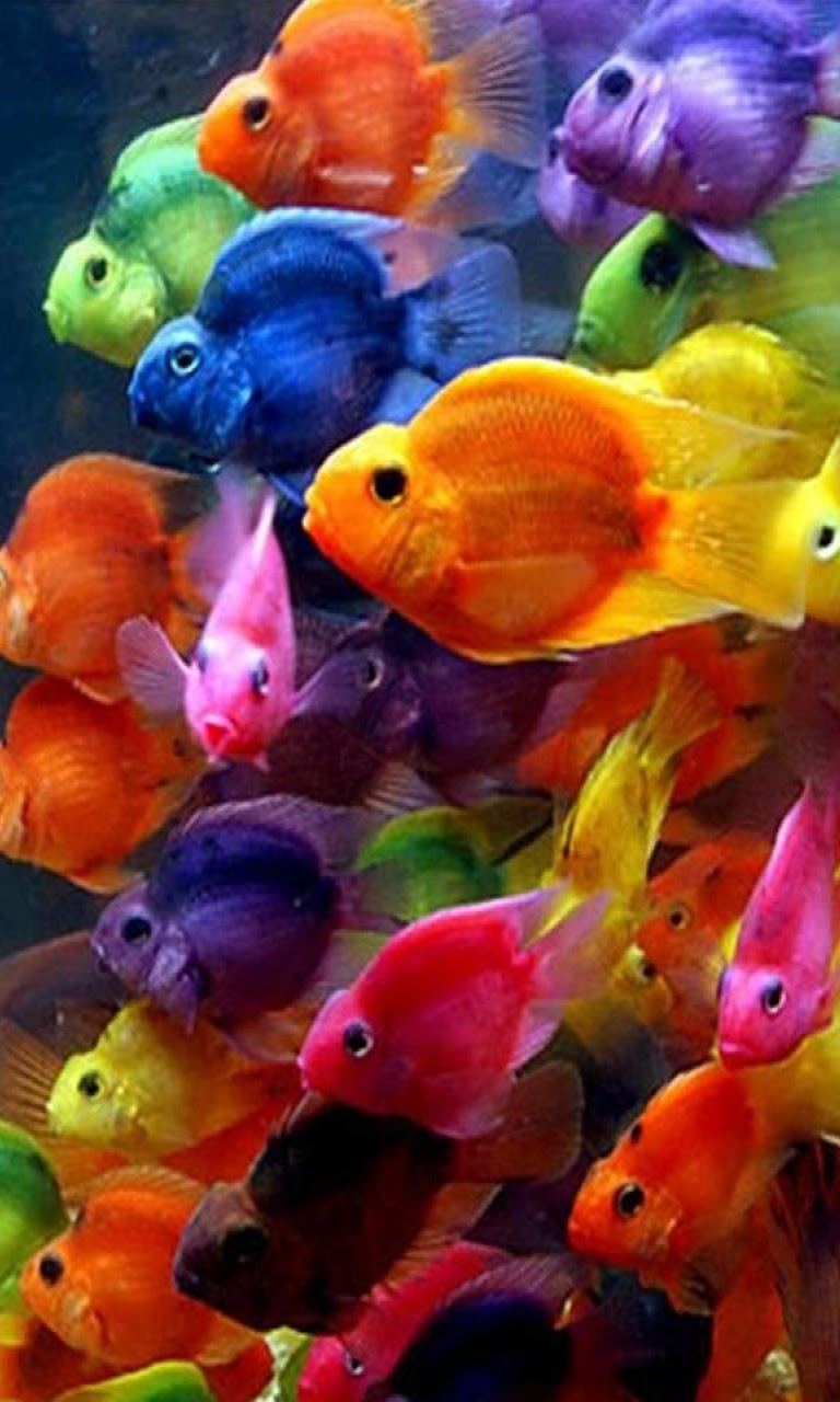 Android Best Wallpapers: Colorful Fish Android Best Wallpaper