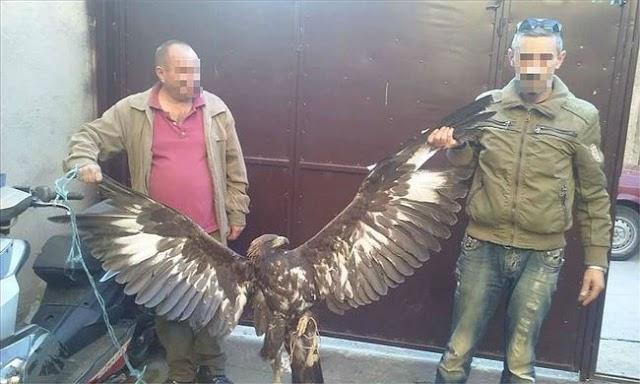 Tierquälerei in Bitola für Facebook Fotos