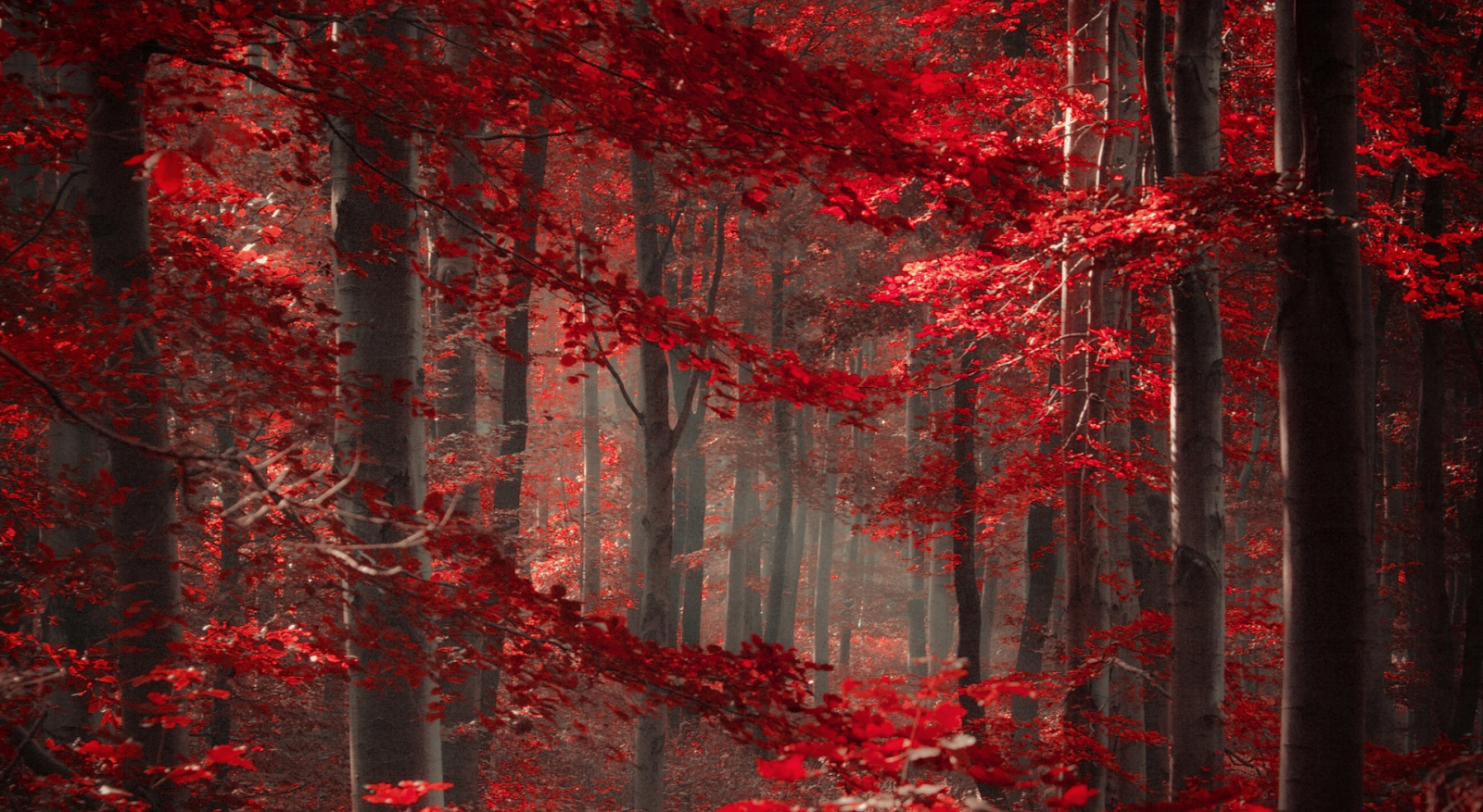 Forest 4k Quality Iphone Wallpaper: Enchanted Forest Wallpaper