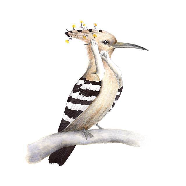 ilustración de pájaros, abubilla, aves de la albufera, upupa epops, ilustración de aves, aves mediterráneas, aves de la península ibérica, aves españolas, Inktober, Inktober 2017,