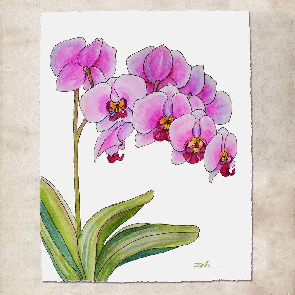 simple orchids paintings - 1000×1000