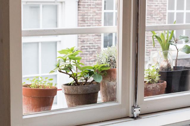 amsterdam balcón con plantas