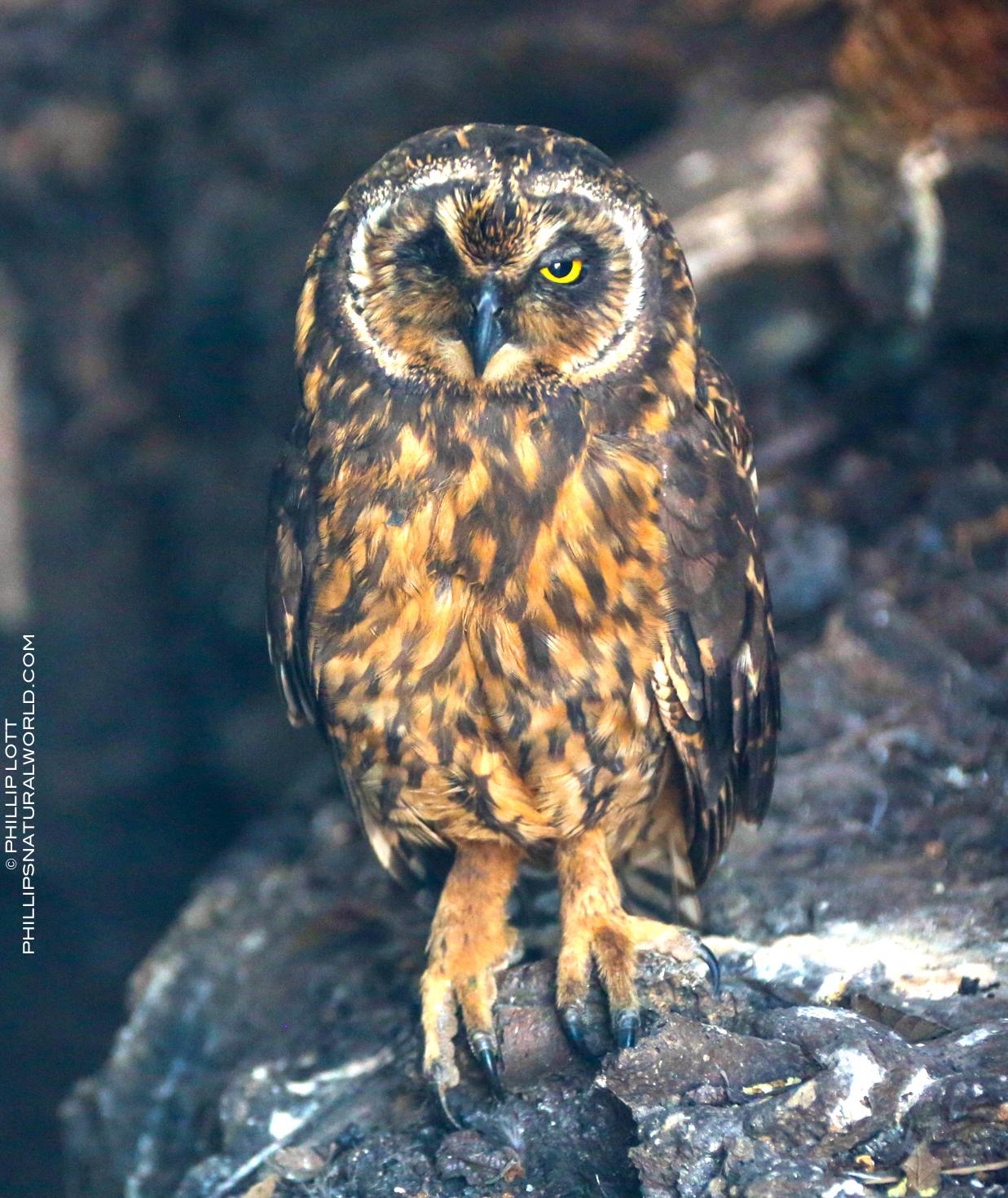 Lesbian owl ranch myrtle creek or