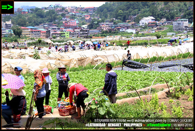 STRAWBERRY FARM BAGUIO