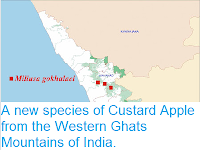 http://sciencythoughts.blogspot.co.uk/2012/06/new-species-of-custard-apple-from.html