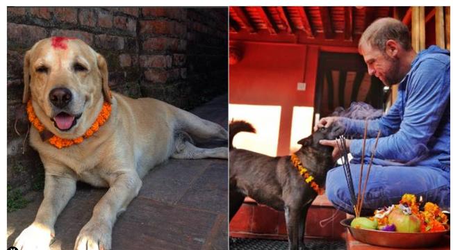 Kukur Tihar or dog festiva