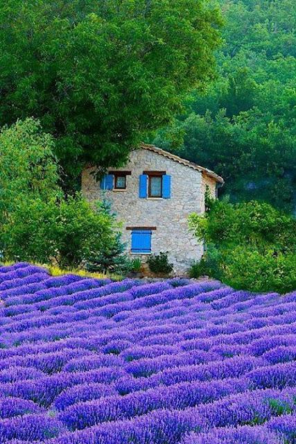 The Nature, Purple fields