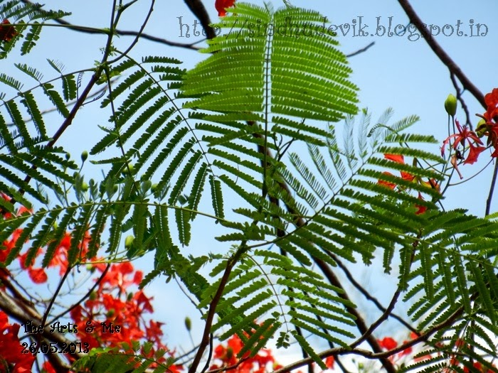 Natural Holi Colours - Green - Gulmohar