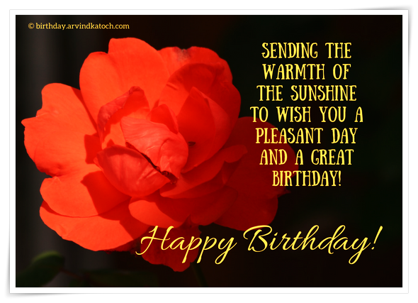 sunshine, warmth, birthday, rose, flower, birthday card,