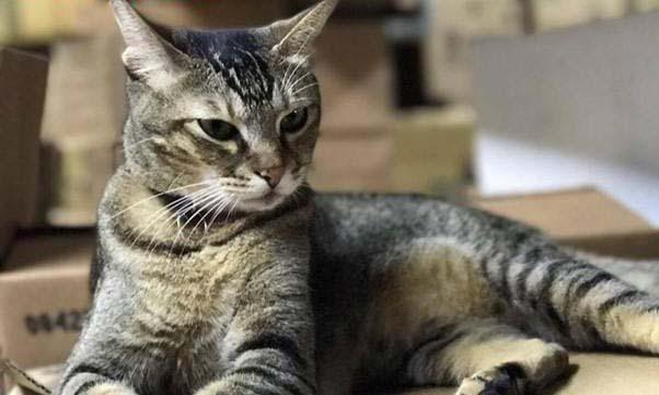 Cứu chú mèo khỏi bị cáo buộc bằng 70.000 chữ ký