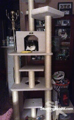 My Cat Tree & Celebrating a Birthday