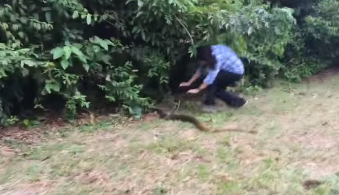 Fearless woman tackles 6-foot Snake (VIDEO)