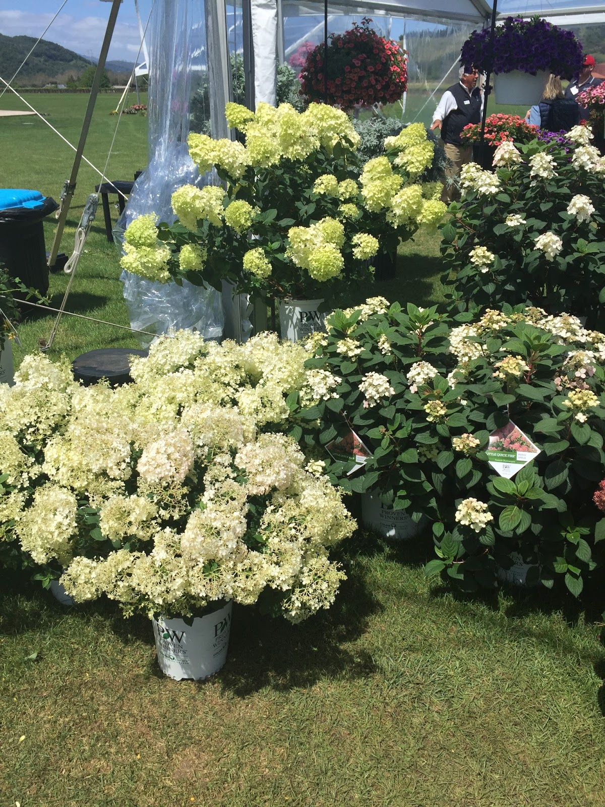 Proven Winners Colorchoice Plant Of The Week April 2016