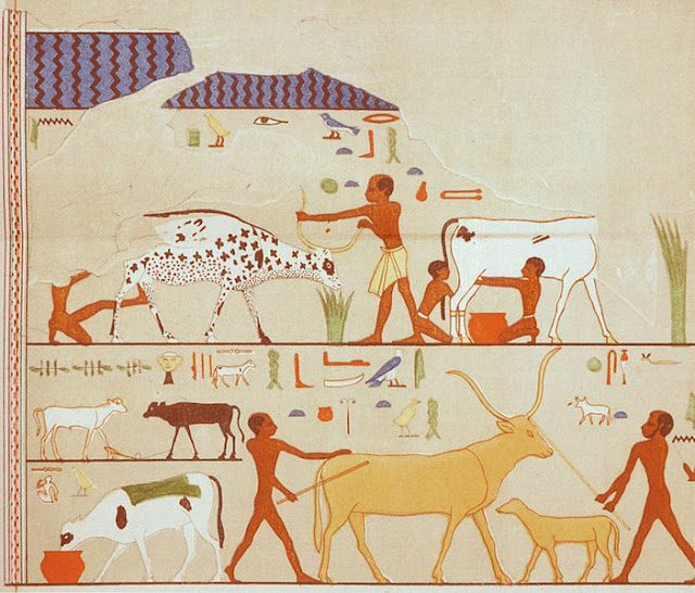 Scenes painted on white plaster. The mastaba of the official and priest Fetekti