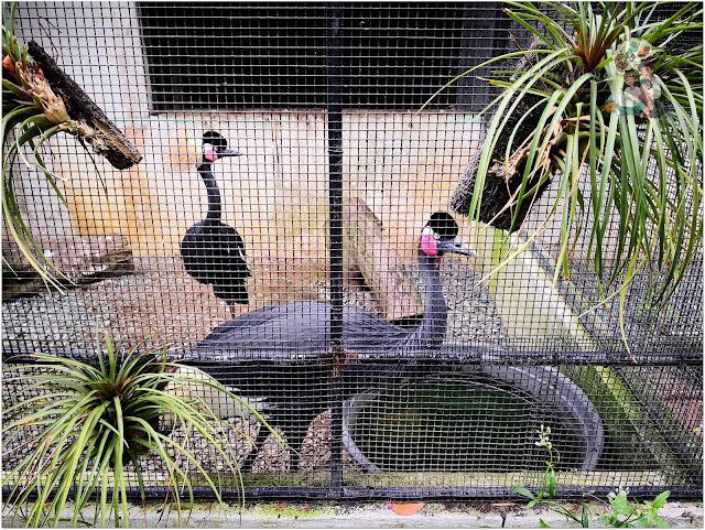 Yoki's Farm Birds