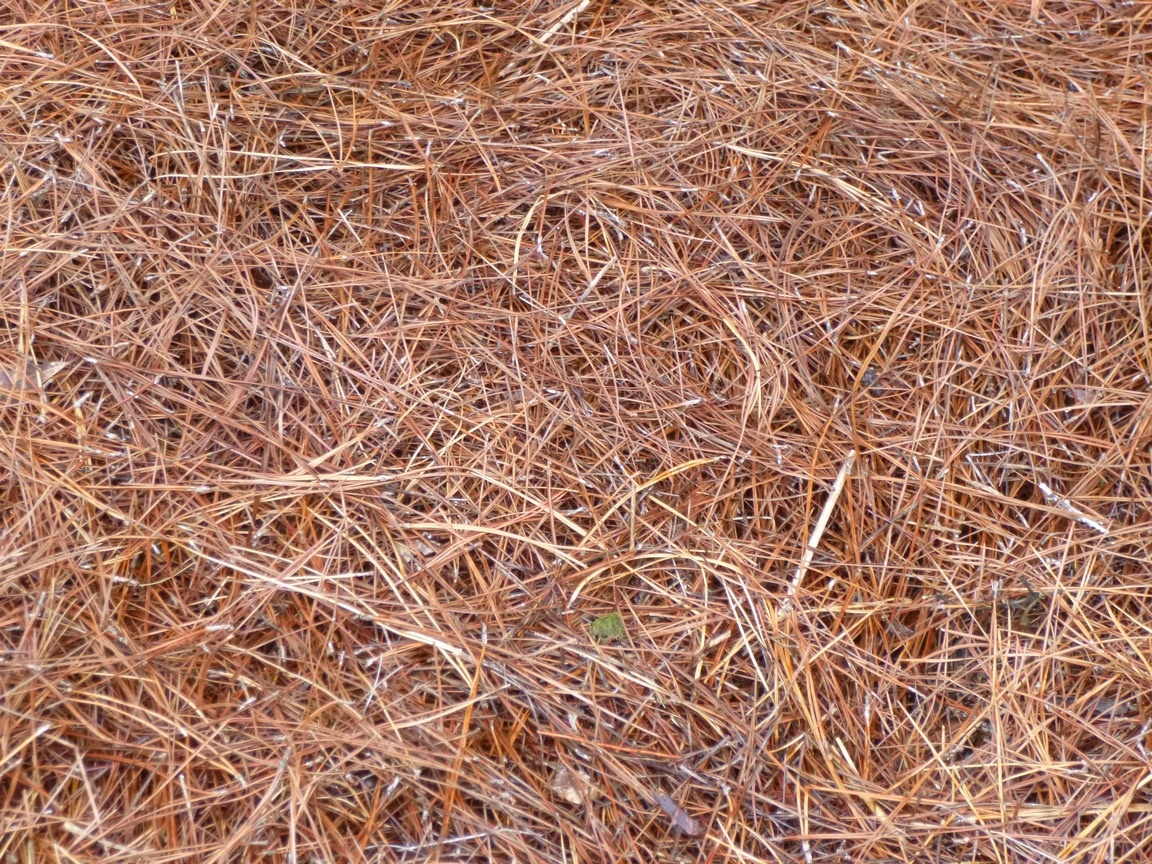 Six Reasons Why Pine Straw Makes The Best Mulch
