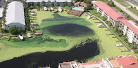 An algal bloom in a Florida harbor:  Growing warmth and increasing nitrite are likely to make them commoner. Image: John Moran via Wikimedia Commons Click to Enlarge.