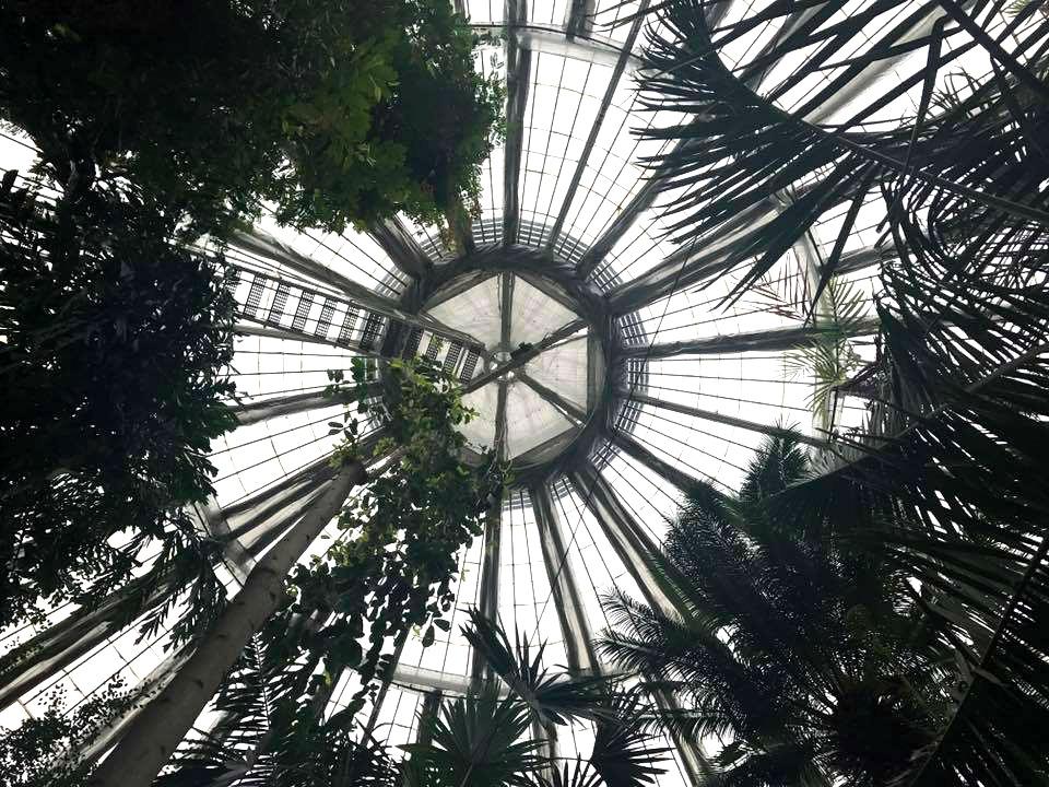 ceiling of botanican gardens copenhagen
