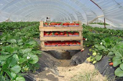 Image result for γεωργικά προϊόντα -