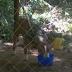 Onix, un perrito condenado por sus malas amistades