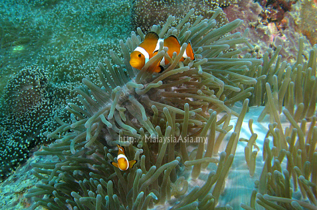 Underwater photo Perhentian Island