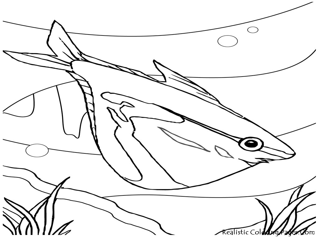 Ocean Fish Coloring Pages Realistic