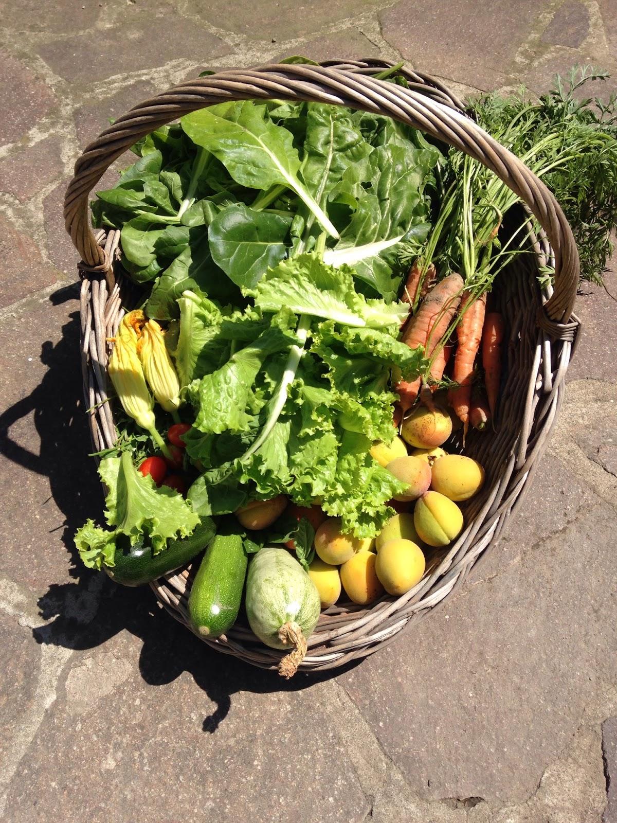 L 39 indispensabile cucina mobile di raccolti nell 39 orto e for Cucinare le zucchine