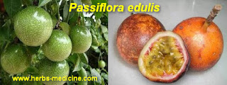 Beauty use Passiflora edulis