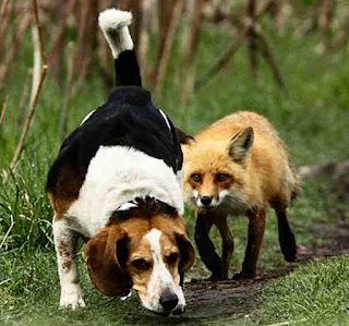 Doggy I am following you