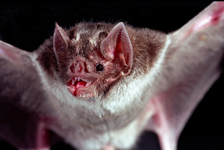Agricultor morre após ser mordido por morcego