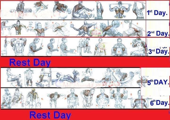 Good Gym Workout Plan