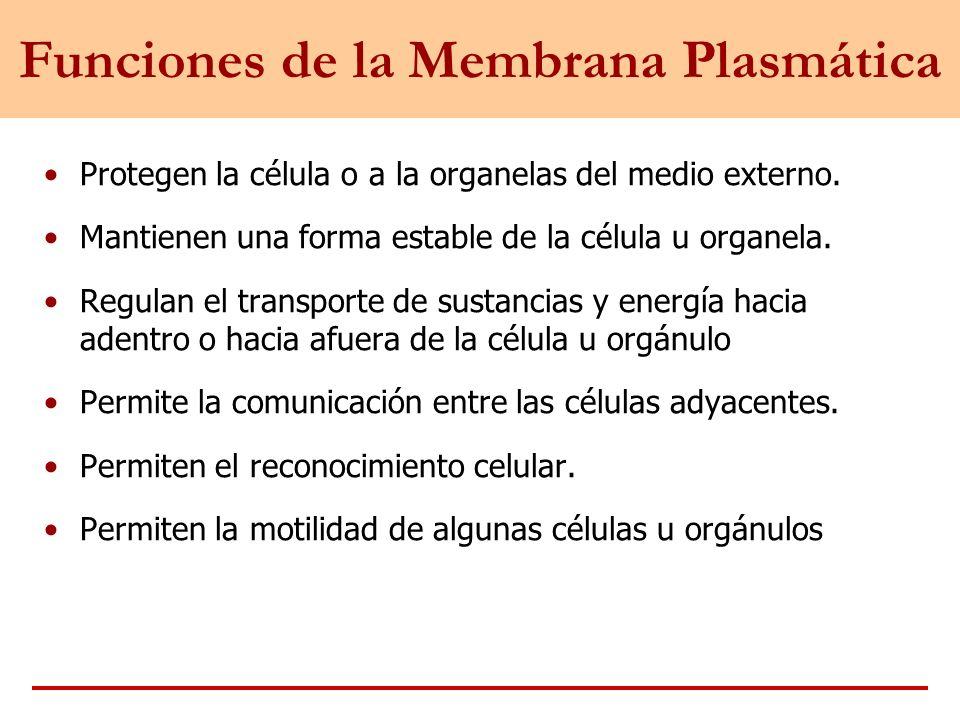 Viviana Artículos Membrana Plasmática Estructura Y Función