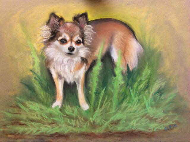 pastelli maalaus kuivapastelli chihuahua