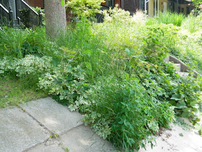 Palmerston Toronto Front Garden Cleanup before by Paul Jung Gardening Services