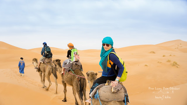 morocco sahara desert dromedary ride