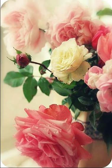 Kumpulan Gambar Bunga yang Cantik