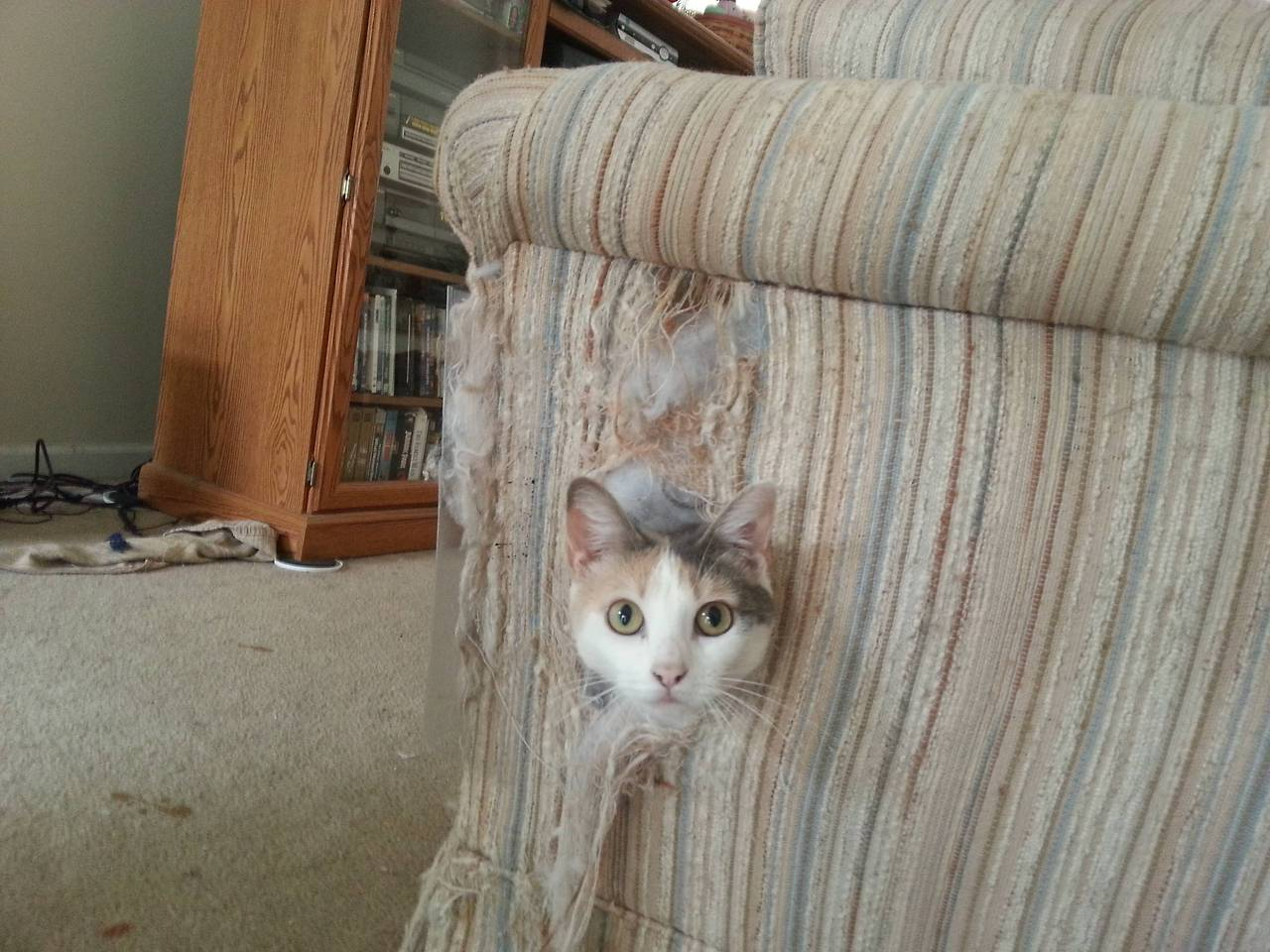 Dr Futonberg S Product Recommendations Futons Sofa Beds How To Prevent Cats From Scratching And Destroying Your Couch