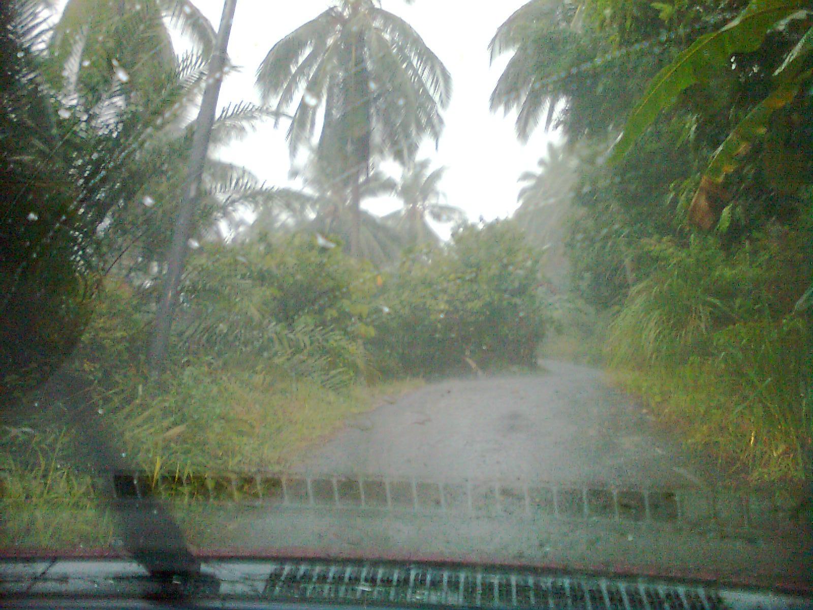 Kancil 8349 Hujan Lebat Di Batu Payong