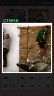 бык загнал на стену двоих мужчин