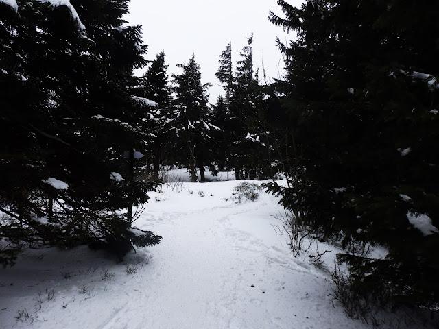 Wycof z Babiej Góry