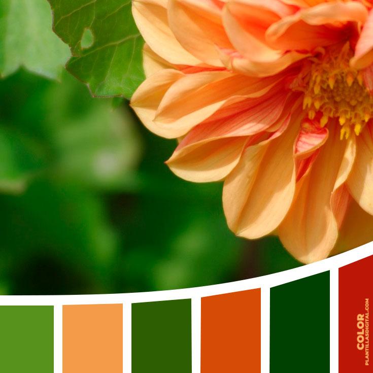 color_319