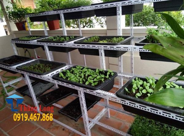 Thiết kế kệ trồng rau sạch với kệ sắt V lỗ đa năng