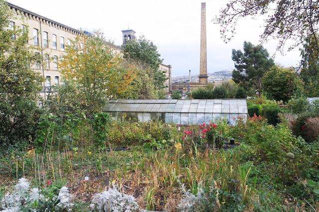 community allotments filled with plants and colour, with salts mill in the background