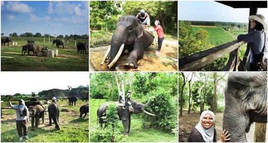 pusat-konservasi-gajah-way-kambas-eloratour