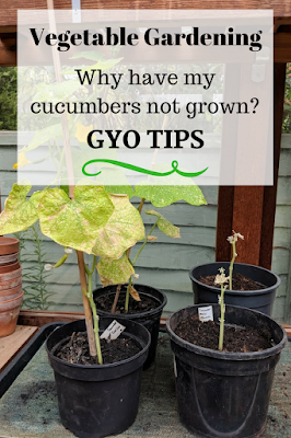 gyo gardening tips why cucumbers not grown
