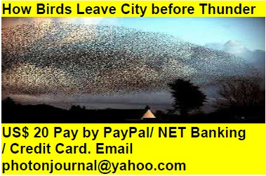 How Birds Leave City before Thunder bird story book