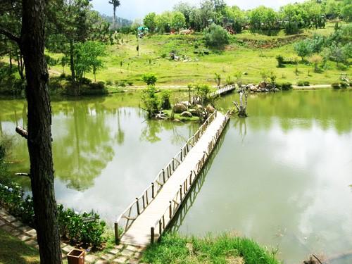 Hình ảnh cây cầu đi vào thung lũng vàng